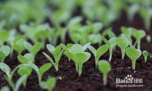种子发芽箱怎么让种子快速发芽