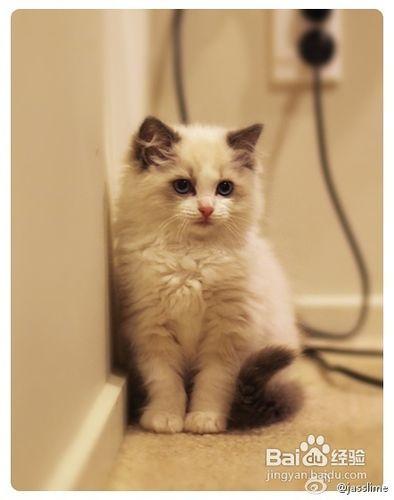 猫咪不听话喷水图片