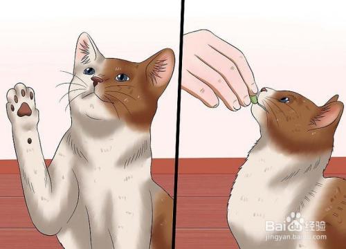 怎么教猫咪站立图片