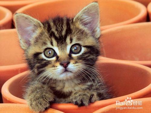 让猫出来的猫叫声图片