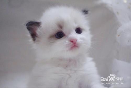 室内养猫有哪些禁忌?