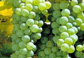 受用的十个葡萄酒常识