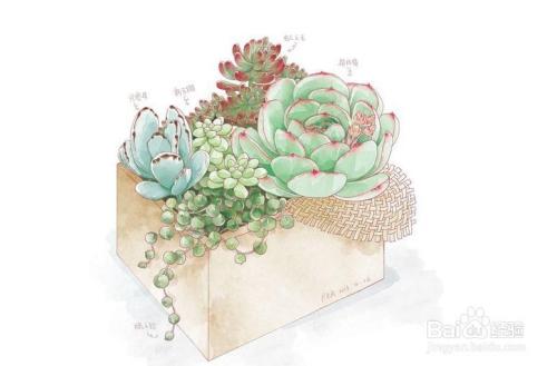 多肉植物叶子种植方法图片