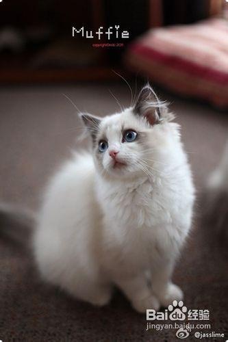 如何训练猫咪不咬人图片