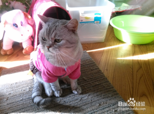 猫咪营养膏排名图片