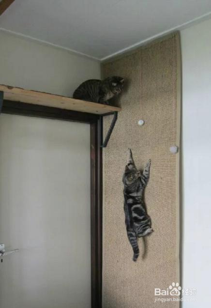 怎么给猫咪喂驱虫药图片