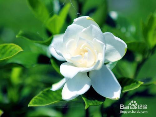 适合家养的开花植物图片
