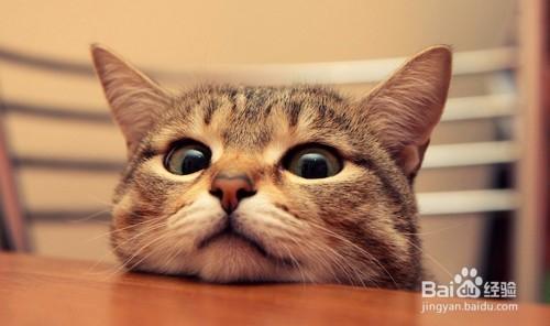 怎么防止猫开门跑出去图片