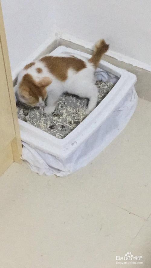 怎么训练猫用蹲便厕所图片