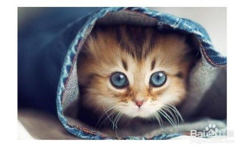 猫咪体内驱虫注意事项图片