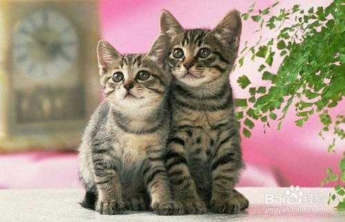 猫咪感染寄生虫图片