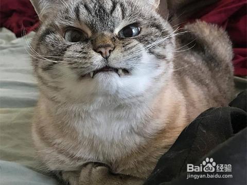 铲屎官的哪些行为会让猫很嫌弃?