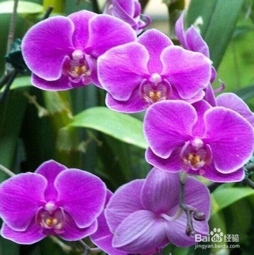 各种花的象征意义大全图片