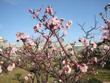 樱花常见病虫害图片图片