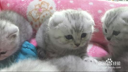 养母猫好还是公猫好?