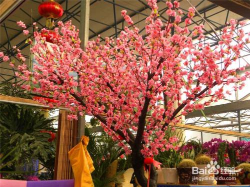 春节时的盆栽鲜花类图片