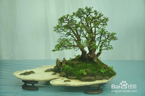 微型盆景制作过程图片