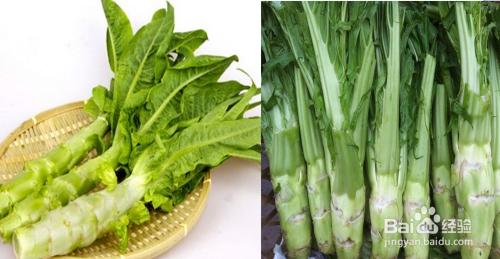 萵苣和萵筍的區別