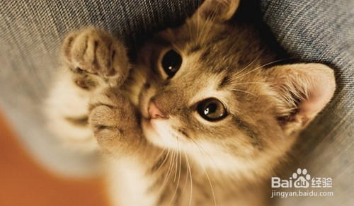 怎么让猫不跑出门图片