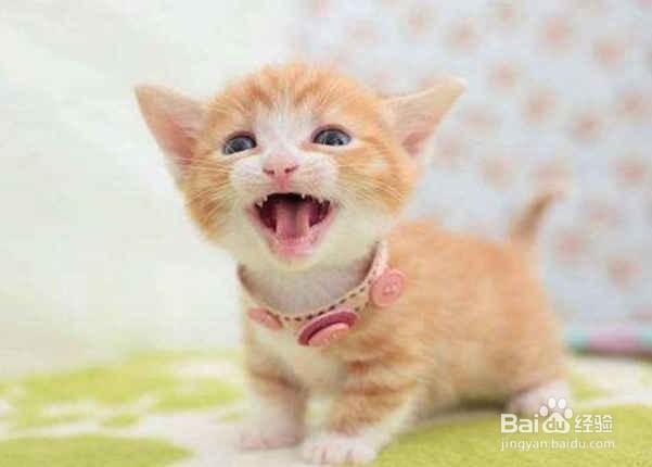 猫咪老叫怎么办?