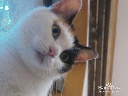 猫咪需要同类陪伴嘛图片
