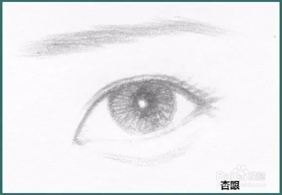 怎么识别自己的眼型