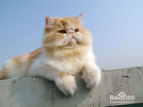 怎样分辨小猫聪明度图片