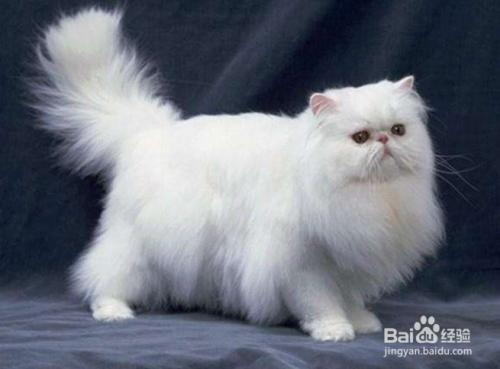 怎么判断猫咪有猫藓图片