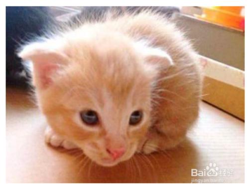 小猫咪什么时候断奶图片