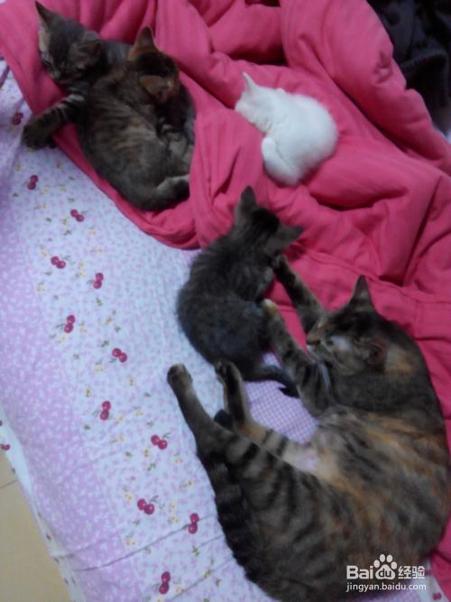 幼猫养护图片
