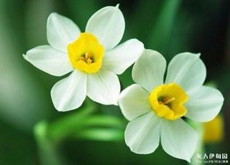 水仙花怎么培育图片