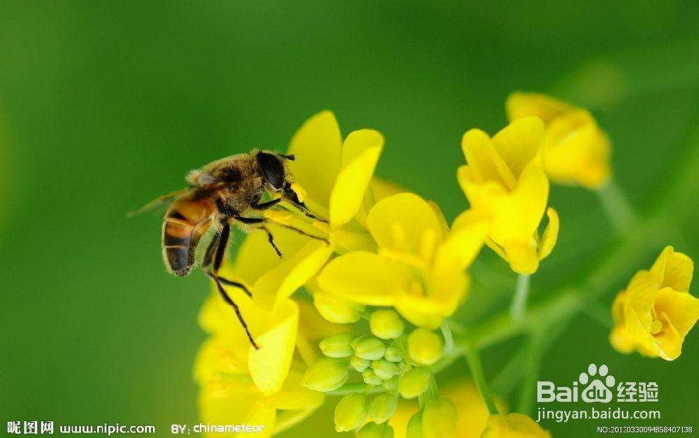 花粉 治療