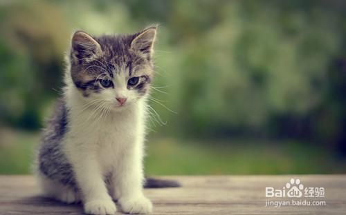 幼猫感冒怎么治疗图片