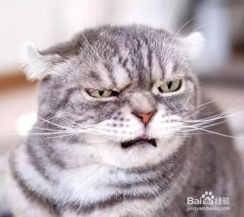 为什么饲主不可以打猫?