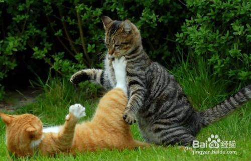 猫咪寄生虫会传染人吗图片