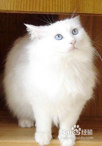 小猫在家乱尿怎么办图片