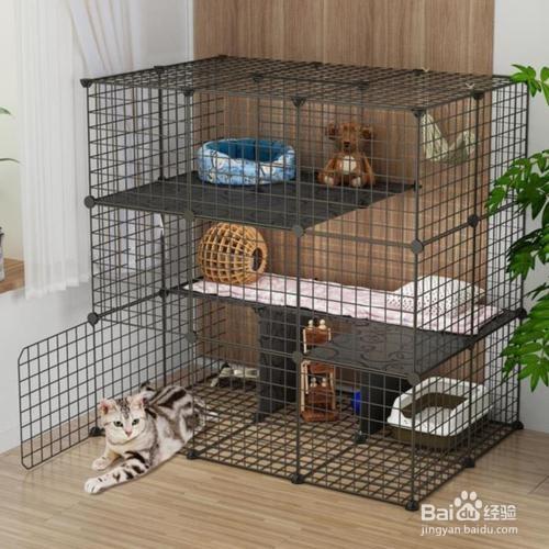 猫来新家先笼养有什么好处?