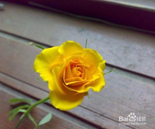 桂花的花语是什么图片