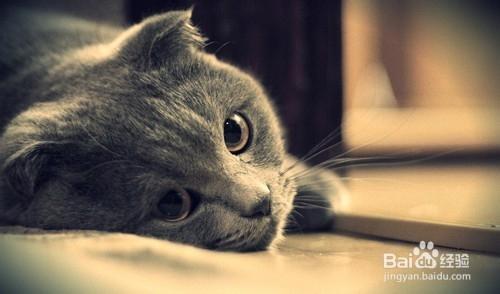 怎么防止猫跑出去图片