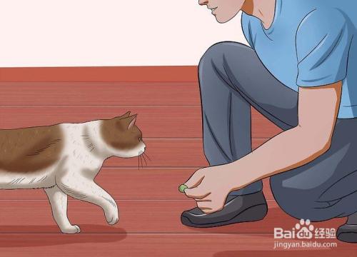 怎么训练猫咪不护食图片