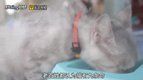 饲养宠物猫的过程图片