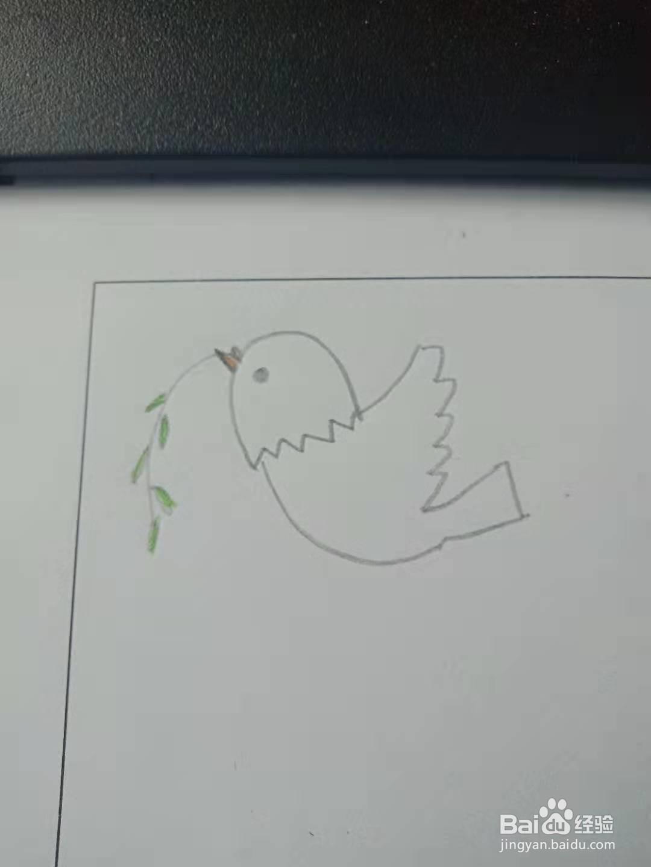 小鸽子的创意简笔画