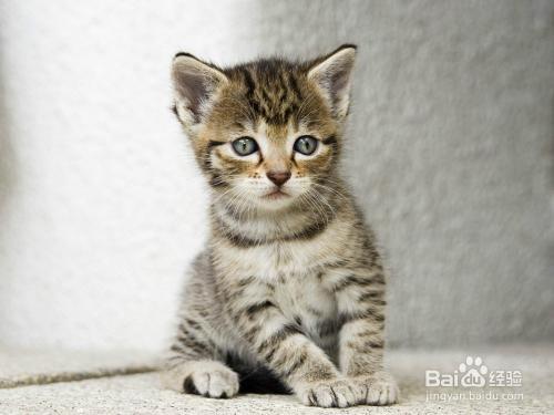 让猫咪听话图片