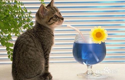 猫咪感染寄生虫症状图片