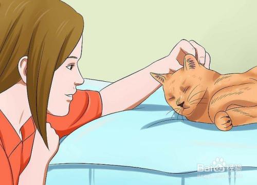 怎么训练猫呼之即来图片