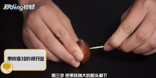 牛油果盆栽修剪方法图片