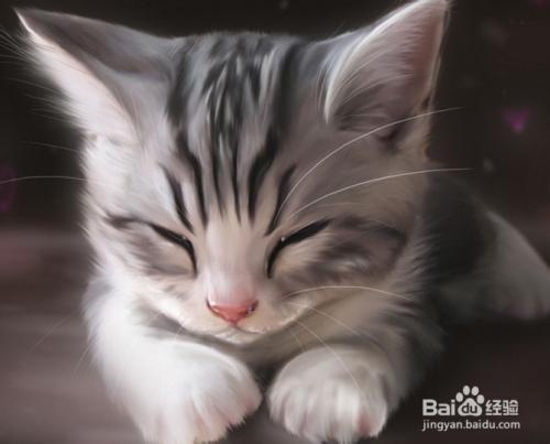 猫咪把人当妈妈的表现图片