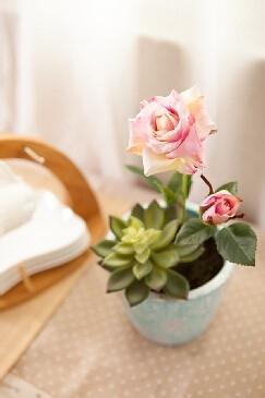 玫瑰花病害防治图片