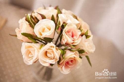玫瑰花常见病害图片大全图片