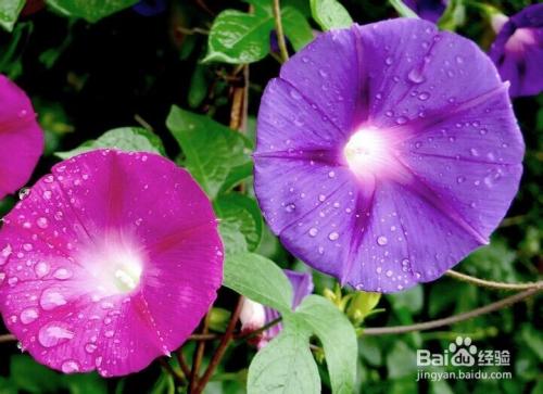 各种花的寓意图片